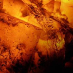 Под янтарным небом: Amber Sky Ex Nihilo