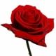 Luscious Roses от Joanne Bassett