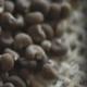 Амбретта: Деликатный Растительный Мускус