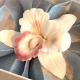 Диффузор Suleko Scented Orchid