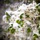 Quelques Fleurs Jardin Secret Houbigant: юное лицо классики